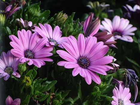 Бесплатные фото цветы,цветочный,флора,букет