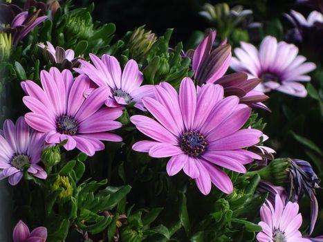 Фото бесплатно цветы, цветочный, флора