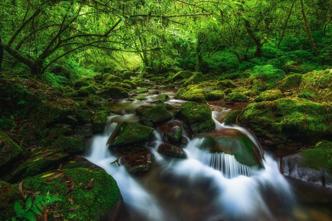 Фото бесплатно лес, деревья, камни, речка, река, водопад, природа, пейзаж, пейзажи