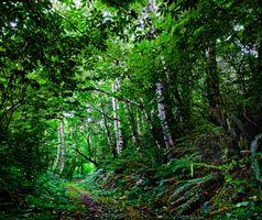 Заставки пейзаж, лес, Mill Creek State Park