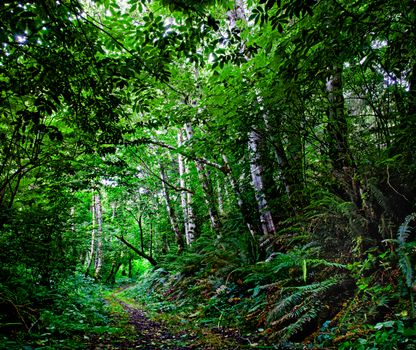 Фото бесплатно пейзаж, лес, Mill Creek State Park