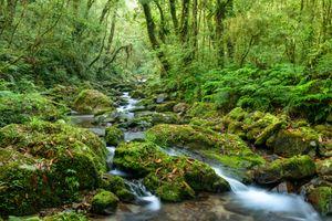 Бесплатные фото лес,деревья,камни,речка,река,природа,пейзаж