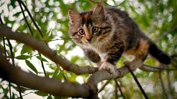 Бесплатные фото природа,кошки,животныеб ветка,листва,охота
