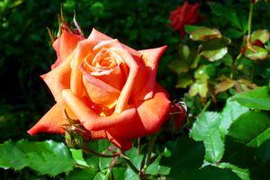 Оранжевые цветы · бесплатное фото