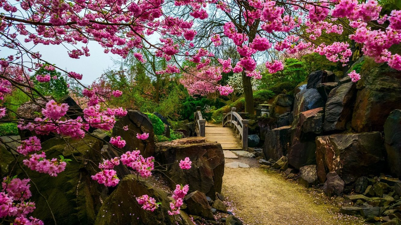 Japanese garden · бесплатная заставка