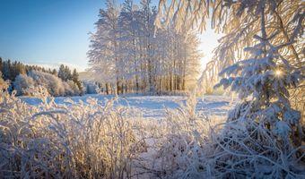 Заставки зима,снег,деревья,солнечные лучи,лес,природа,пейзаж
