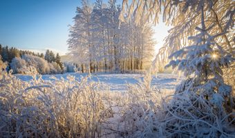 Фото бесплатно деревья, зима, лучи солнца