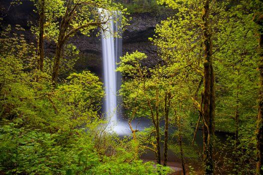Бесплатные фото Государственный парк,Silver Falls,Орегон,водопад,деревья,природа,пейзаж