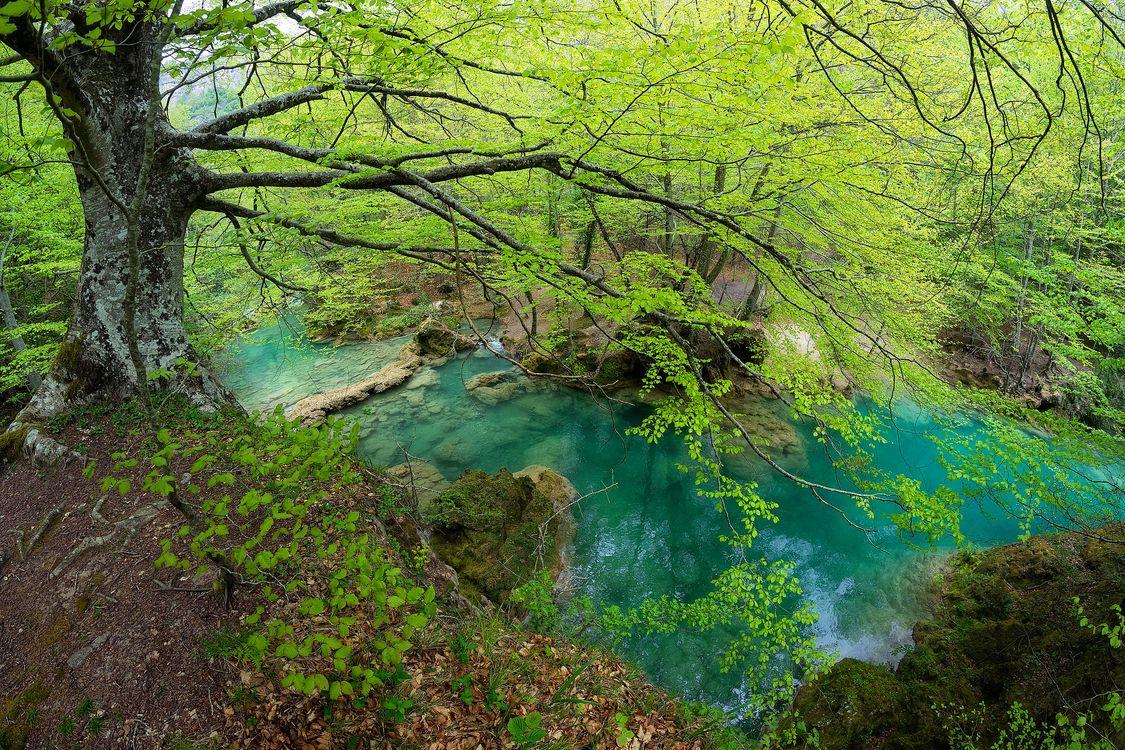 Река и деревья · бесплатное фото