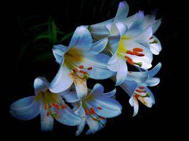 Цветы картинки · бесплатное фото