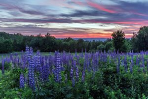 Заставки закат, поле, цветы