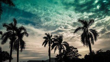 Photo free getting dark, attalea speciosa, tree