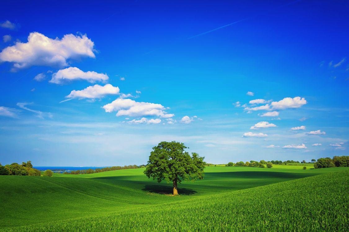 Скачать обои поле, холмы, трава