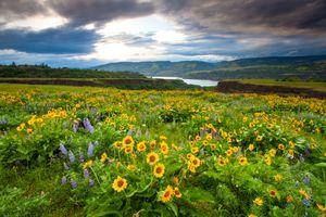 Бесплатные фото Ровена,штат Орегон,поле,цветы,река,холмы,природа