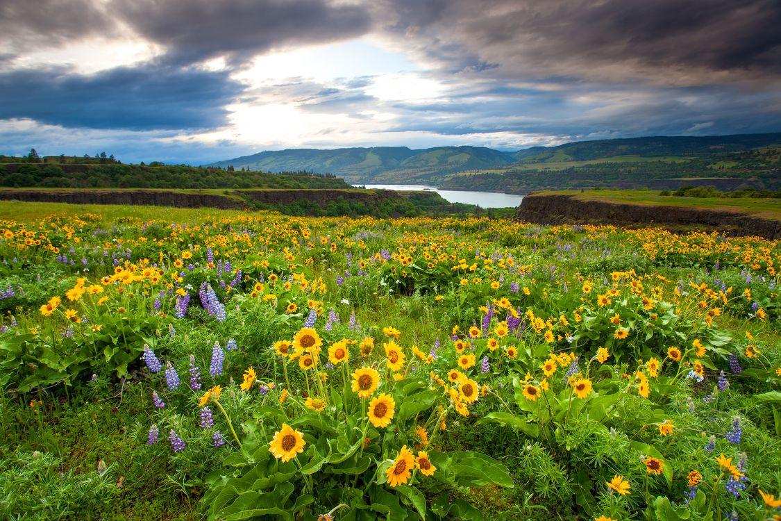 Фото бесплатно Ровена, штат Орегон, поле - на рабочий стол