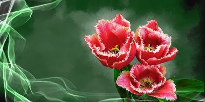 Цветы очень красивые!