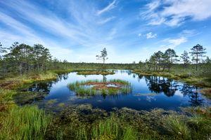 Фото бесплатно Estonia, озеро, водоём