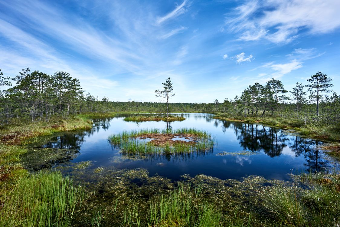 Фото бесплатно Estonia, озеро, водоём, болото, деревья, небо, природа, пейзаж, пейзажи - скачать на рабочий стол