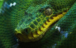 Заставки удав, змея, зеленая