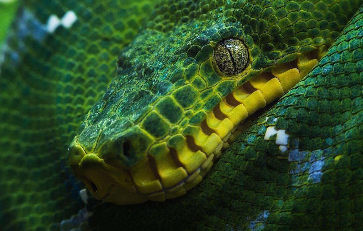 Фото удав змея зеленая - бесплатные картинки на Fonwall