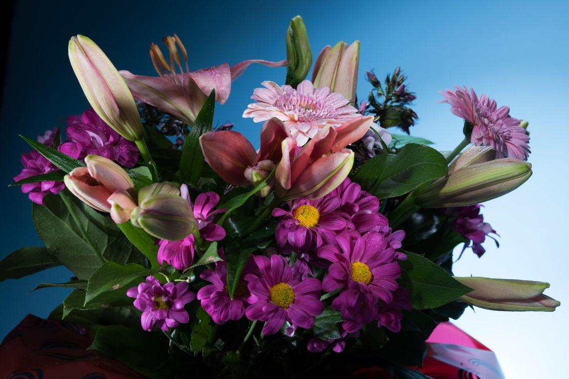 Фото бесплатно цветы, букет, цветок, цветочный, цветение, цветочная композиция, флора, цветы