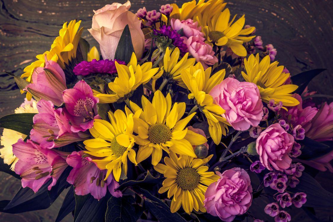 Лучшие цветы · бесплатное фото