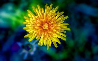 Заставки красивый цветок, макро, флора
