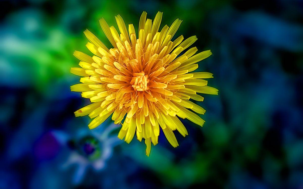 Фото бесплатно красивый цветок, макро, флора - на рабочий стол