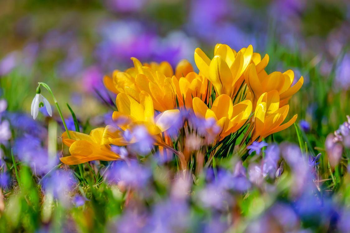 Обои весна, цветы, желтая картинки на телефон