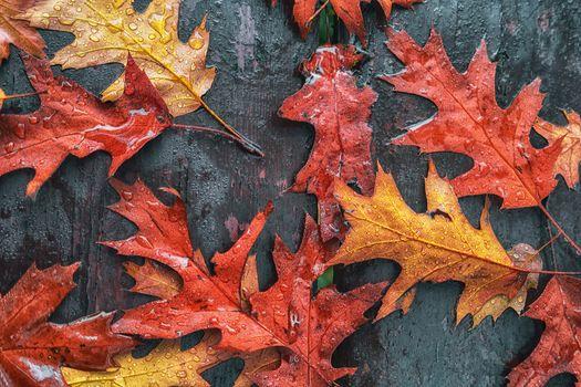 Заставки осень,кленовые листья,осенние листья,краски осени,природа