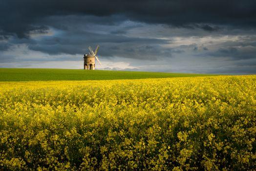Photo free field, flowers, windmill