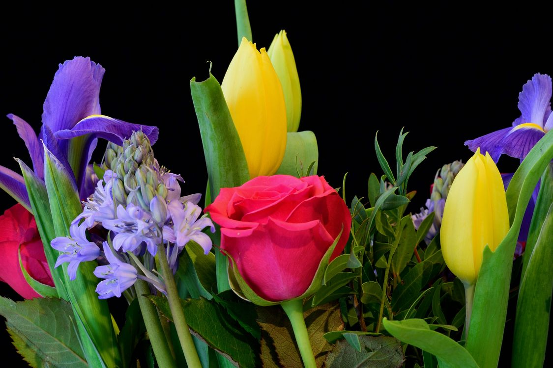 Фото бесплатно розы, тюльпаны, лепестки, букет, цветы