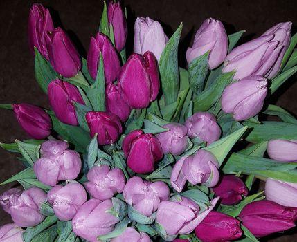 Фото бесплатно цветы, тюльпан, флора
