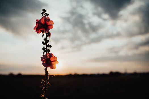 Фото бесплатно цветок, розовый, солнечный свет