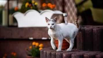 Подросший котёнок в саду