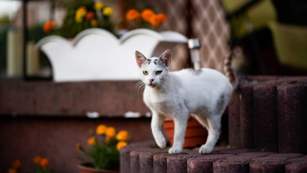 Mature kitten in the garden · free photo