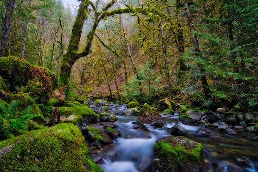 Бесплатные фото лес,деревья,речка,камни,течение,мох,природа,пейзаж