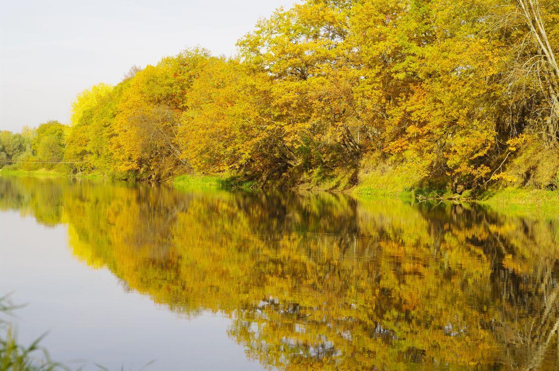 Фото бесплатно осенний берег, река, деревья, кроны, листопад, пейзажи