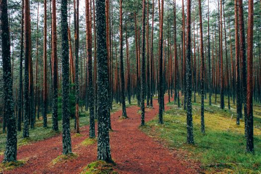 Photo free tree, forest, desert