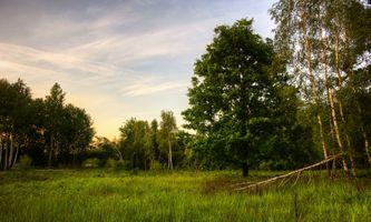 Бесплатные фото лето,поляна,закат,деревья,трава,природа,пейзаж