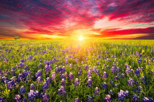 Красочный закат на поле люпин · бесплатное фото