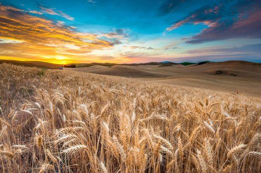 Фото бесплатно колосья, небо, пейзаж