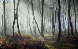 Фото бесплатно лес, солнечный луч, деревья