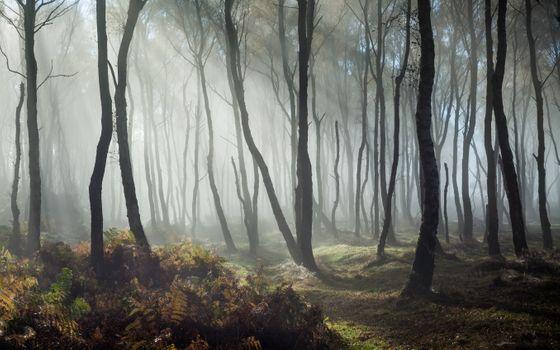 Photo free forest, sunbeam, trees