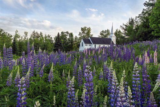 Фото бесплатно Фотография поля люпина возле часовни Св Матфея в городе Сагар-Хилл, штат Нью-Хэмпшир, поле