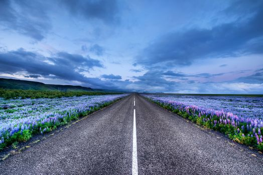 Photo free Iceland, lupine field, road