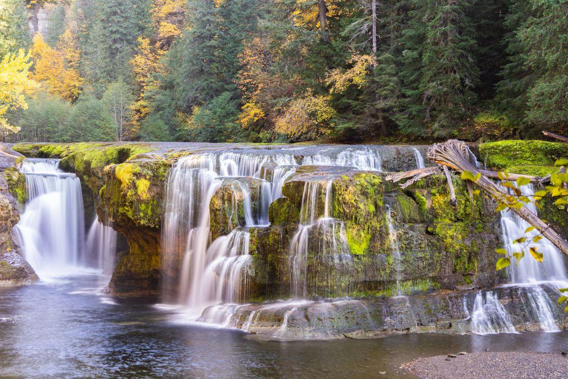 Лесной водопад · бесплатное фото