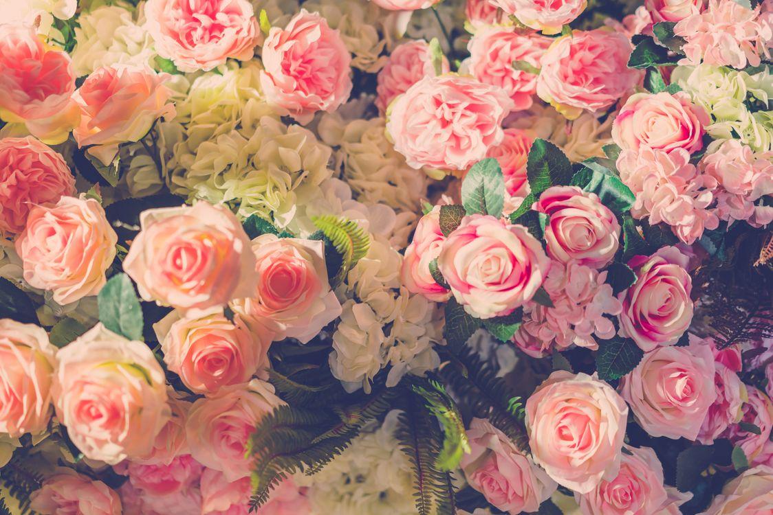 Фото бесплатно много, розы, цветы, букет, розовые, бутоны роз, цветы
