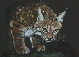 Фото бесплатно рысь, дикая кошка, морда, взгляд, чёрный фон, art