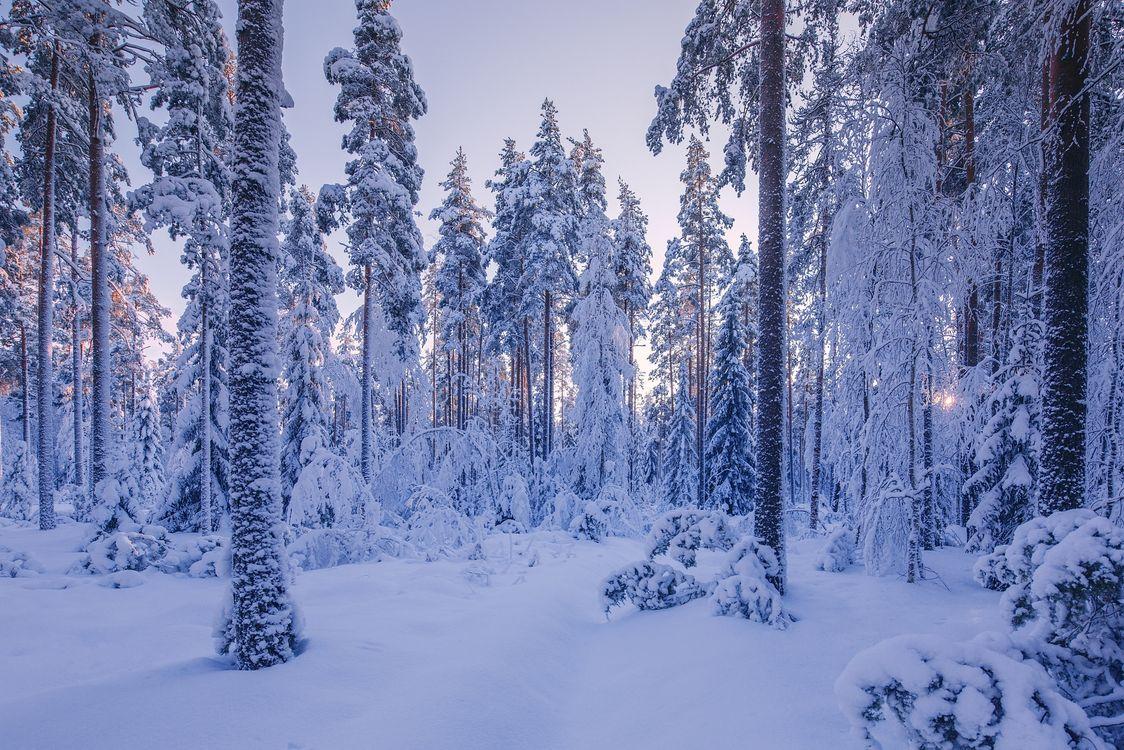 Фото бесплатно зима, лес, деревья, сугробы, снег, природа, пейзаж, зимний лес, закат, пейзажи
